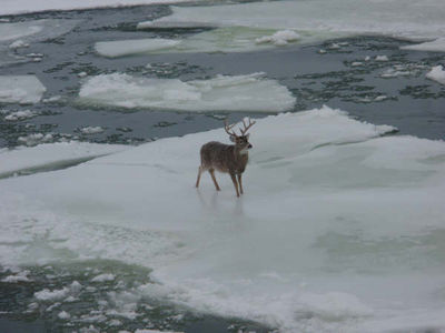 WHITETAIL_BUCK_ON_THE_ICE_08_008